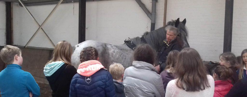 Menles 1: inspannen van het paard
